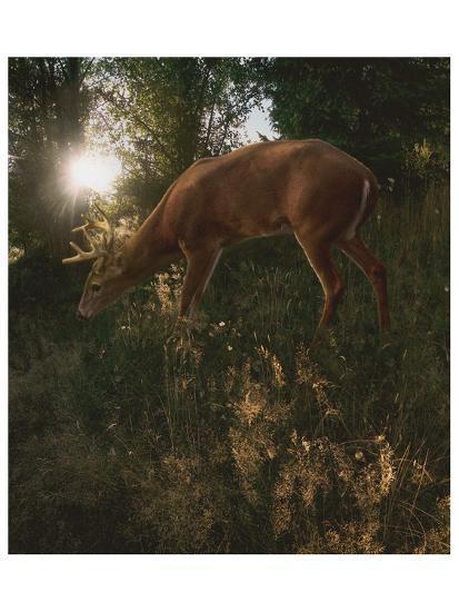 Deer Light-Steve Hunziker-Art Print