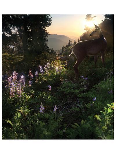 Deer Pass-Steve Hunziker-Art Print