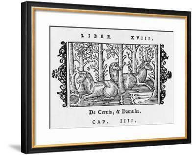 Deer Resting under Trees in a Forest--Framed Giclee Print