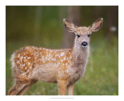 Deer Watch III-Ozana Sturgeon-Art Print