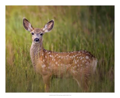 Deer Watch IV-Ozana Sturgeon-Art Print