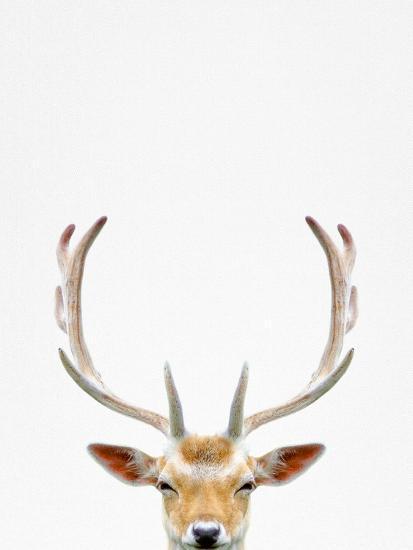Deer-Tai Prints-Photographic Print
