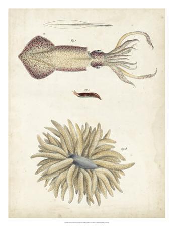 Ocean Curiosities I by DeKay