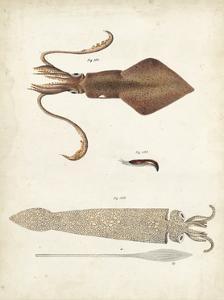Ocean Curiosities II by DeKay