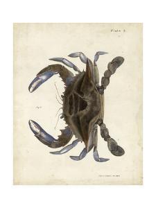 Vintage Crab II by DeKay