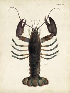 Vintage Lobster by DeKay