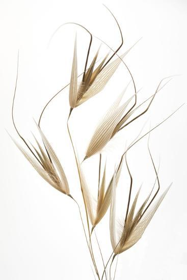 Delicacy of nature-Thierry Lagandré (Transgressed-Photographic Print