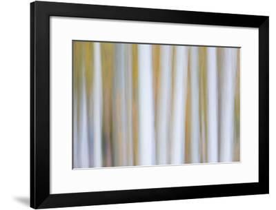 Delicate Aspens II-William Neill-Framed Giclee Print