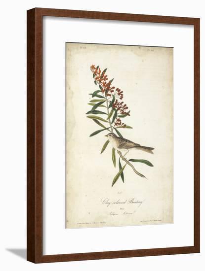 Delicate Bird and Botanical II-John James Audubon-Framed Art Print