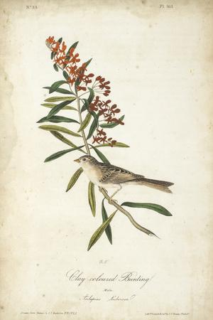 https://imgc.artprintimages.com/img/print/delicate-bird-and-botanical-ii_u-l-q1bflrz0.jpg?p=0