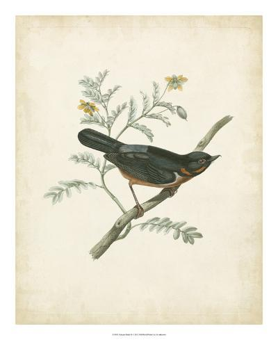 Delicate Birds III--Giclee Print