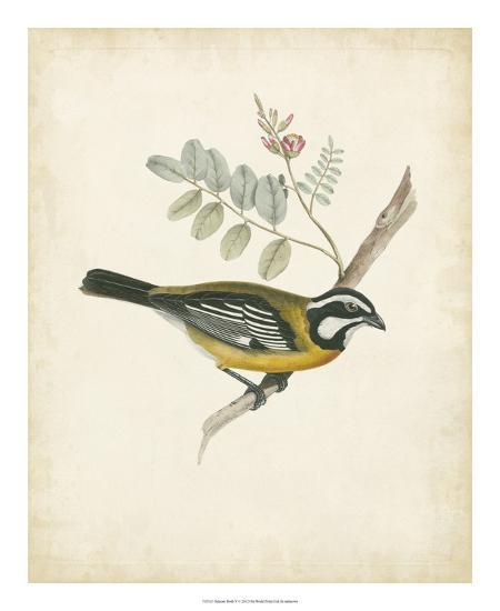 Delicate Birds V--Giclee Print