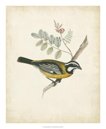 https://imgc.artprintimages.com/img/print/delicate-birds-v_u-l-f5bx1k0.jpg?p=0