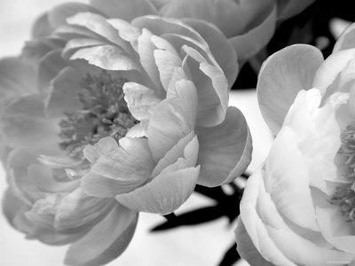 https://imgc.artprintimages.com/img/print/delicate-blossom_u-l-p23gd30.jpg?p=0