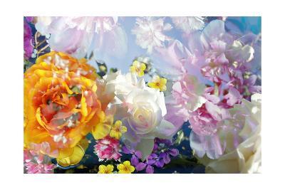 Delicate Blossoms-Alaya Gadeh-Art Print