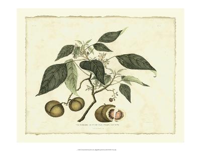 Delicate Botanical II-Samuel Curtis-Art Print