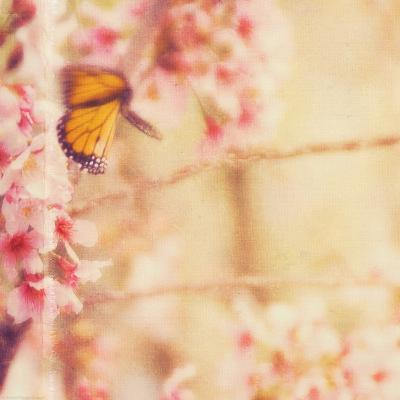 Delicate Butterly and Flowers-Myan Soffia-Photographic Print