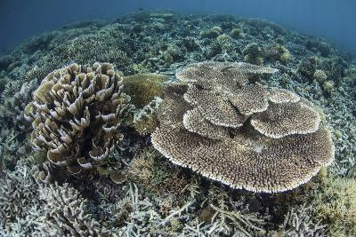 Delicate Corals Grow Near the Island of Flores in Indonesia-Stocktrek Images-Photographic Print