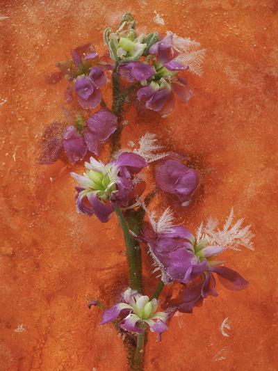 Delicate Creations-Zina Zinchik-Art Print