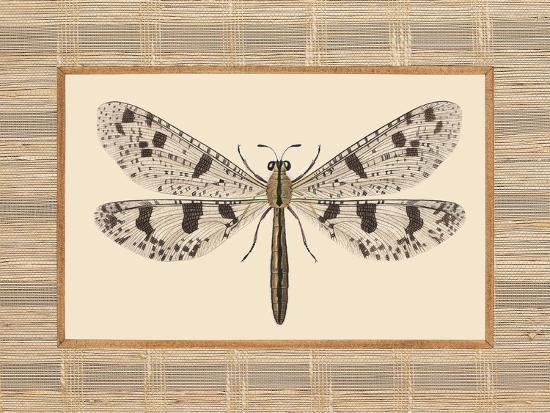 Delicate Dancer III-Sarah E. Chilton-Art Print