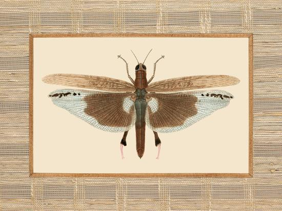 Delicate Dancer IV-Sarah E. Chilton-Art Print