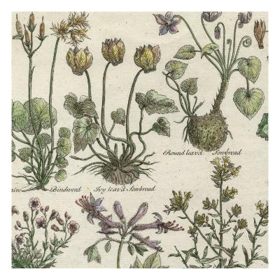 Delicate Garden I-Vision Studio-Art Print