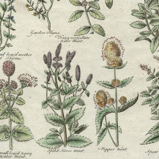 Delicate Garden IV-Vision Studio-Art Print