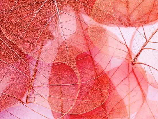 Delicate In Pink-Ingrid Beddoes-Art Print