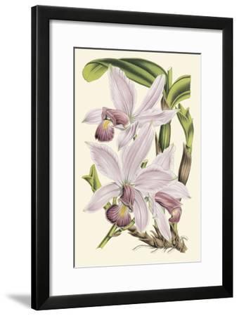 Delicate Orchid I Art Print By Vision Studio Art Com
