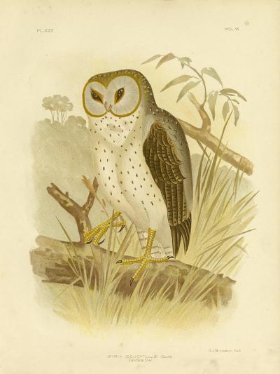 Delicate Owl, 1891-Gracius Broinowski-Giclee Print