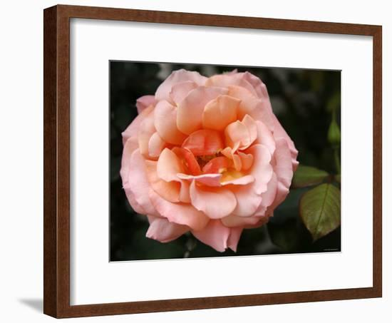 Delicate Petals I-Nicole Katano-Framed Photo