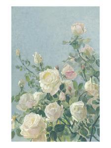 Delicate White Roses