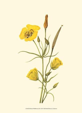 https://imgc.artprintimages.com/img/print/delicate-wildflowers-iii_u-l-f5614f0.jpg?p=0