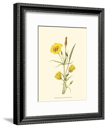 Delicate Wildflowers III--Framed Art Print
