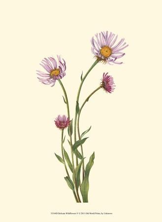 https://imgc.artprintimages.com/img/print/delicate-wildflowers-v_u-l-f5614h0.jpg?p=0