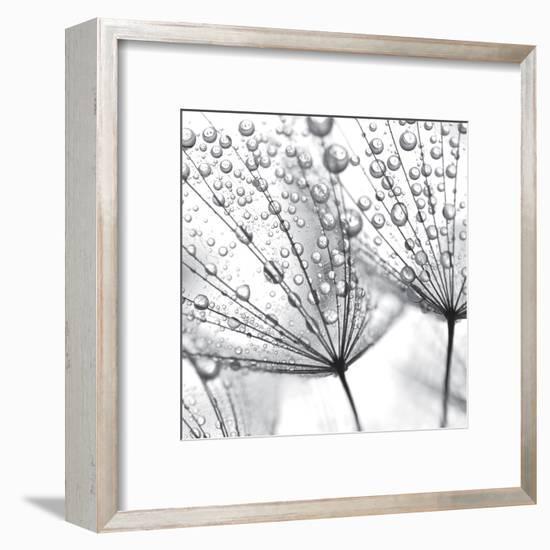 Delicate Wisps II--Framed Art Print