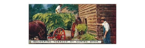 'Delivering Tobacco at Curing Barn', 1926-Unknown-Giclee Print
