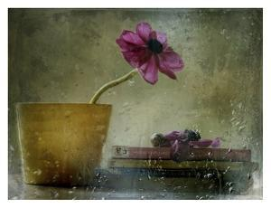 A Day To Stay At Home by Delphine Devos