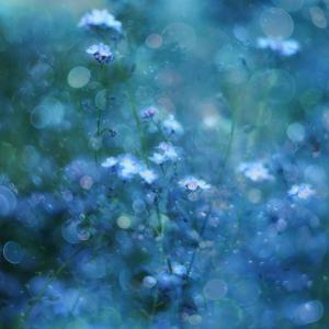 Blue Serenity by Delphine Devos