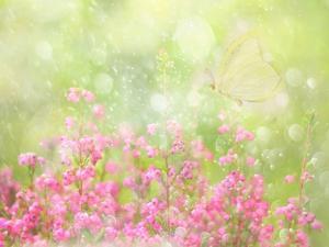 It's a Beautiful Day by Delphine Devos