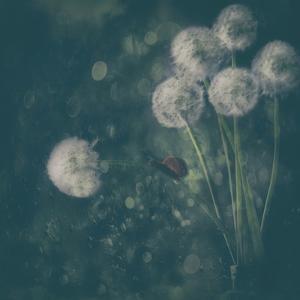 It was a rainy day... by Delphine Devos