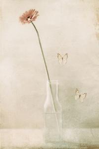 Miss Daisy by Delphine Devos