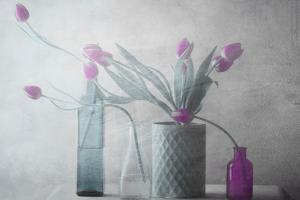 Purple Tulips by Delphine Devos