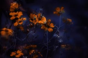 Symphony in Red by Delphine Devos