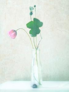 The Pink Flower by Delphine Devos