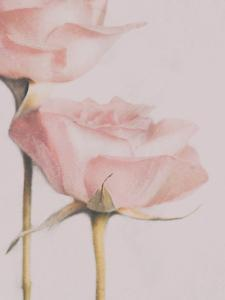 Two Roses by Delphine Devos