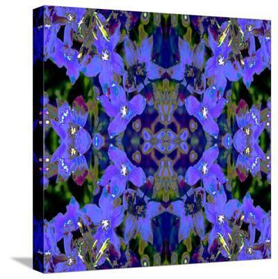 Delphinium X2-Rose Anne Colavito-Stretched Canvas Print