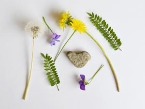Collection of Wildflowers, Ferns and Heart Shaped Rock by Demelzaandreoli