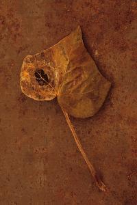 Autumn Brown by Den Reader