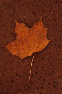 Autumn Leaf On Rust by Den Reader
